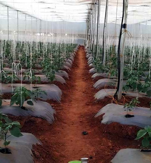 greenhouse-farming